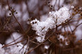 Snow Branches in the winter , close up shot Royalty Free Stock Image