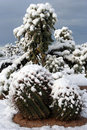 Snow Cactus Stock Photography