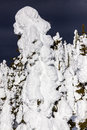 Snow caked onto trees in mountains covered the sunshine Stock Photo