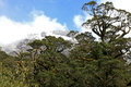 Snow capped mountains at milford sound new zealand Royalty Free Stock Photos