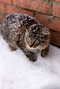 Snow cat Royalty Free Stock Photo