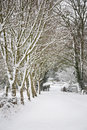 Snow covered avenue of trees in the county somerset uk Stock Photo