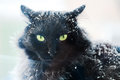Snow covered black cat winter time Stock Photo