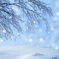 Snow covered branch Royalty Free Stock Images