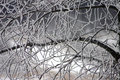 Snow Covered Branches Royalty Free Stock Photos