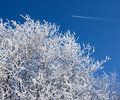 Snow covered branches and airplane on the blue sky Stock Photo
