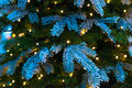 Snow-covered branches of Christmas trees Royalty Free Stock Photo