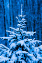 Snow covered christmas tree against blue background of dark winter forest and snowfall horizontal format photography vertical Stock Photography