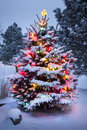 Snow covered christmas tree stands out brightly in early morning light this against the dark blue tones of this scene Royalty Free Stock Photo
