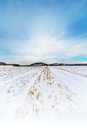 Snow covered crop field with blue sky wheat a light cloud in sweden Stock Photo