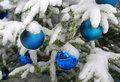 Snow-covered decoration balls hanging on a Christm Stock Image