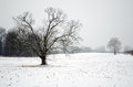 Snow covered field Royalty Free Stock Photography