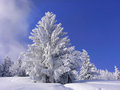 Snow covered fir tree against blue sky Stock Image