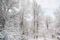 Snow covered forest a in winter in Stock Images