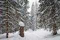 Zasnežené turistické chodníky v zime
