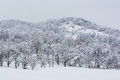Snow covered hill winter landscape with and trees Royalty Free Stock Photo