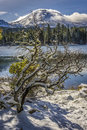 Snow covered manzanita tree manzanita lake lassen peak lassen volcanic national park snowy and clouds over Stock Photos