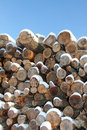 Snow covered old softwood logs agaist blue sky Royalty Free Stock Photos