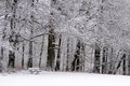 Snow covered park bench and wintry forest in the taunus mountains hesse germany Stock Photos