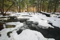 Forest Snow Scene Royalty Free Stock Photo