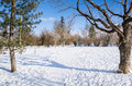 Snow Covered Path through the Woods and Blue Sky Royalty Free Stock Photo