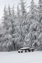 Snow covered picnic bench set with table Royalty Free Stock Photo