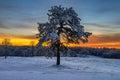 Snow covered pine tree, Cumberland Gap National Park Royalty Free Stock Photo