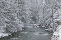 Snow covered pine trees on the side of a river in the winter running through stowe vermont usa Stock Images