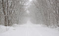 Snow-covered road in the forest Royalty Free Stock Image
