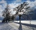 Snow covered road lined by trees Stock Photo