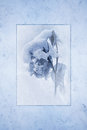 Snow covered rose rendered as antique cyan tone print framed against a cool blue marble texture background Royalty Free Stock Photo