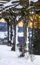 Nevoso righe di alberi