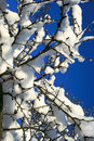 Snow covered tree Royalty Free Stock Photos