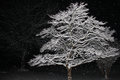 Snow Covered Tree Branches Illuminated Against Black of Night Royalty Free Stock Photo