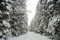 Snow Covered Tree Lined Road Royalty Free Stock Image