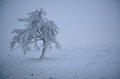 Blizzard Snow covered lone tree Royalty Free Stock Photo