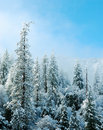 Snow Covered Trees Royalty Free Stock Photos