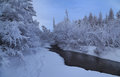 Snow-covered trees along the banks of the creek Royalty Free Stock Photo