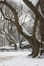 Snow covered trees and lawn in Central Park Royalty Free Stock Photo