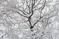 Snow covered treetop Royalty Free Stock Photography