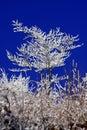 Zasnežené zimné stromy