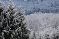 Snow covered wintry forest at engenhahn in the taunus mountains hesse germany Royalty Free Stock Photography