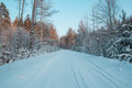 Snow Covered Woods In Winter U...