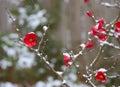 Snow on Flowers Stock Photo