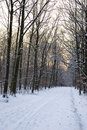 Snow forest alley Royalty Free Stock Images