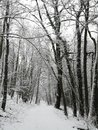 Snow on a forest path in Luxembourg