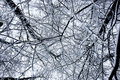 The snow forest patterns Royalty Free Stock Photography