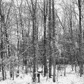 Snow forrest black and white with a birdhouse Stock Images