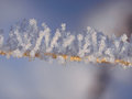 Snow and ice crystals on plants a sunny winter day Stock Photos
