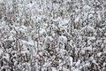 Snow and ice on a plant Royalty Free Stock Photo